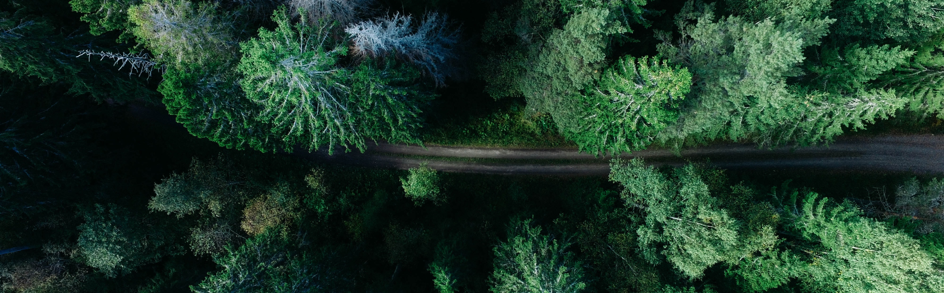 Arial view of a road with trees on either side