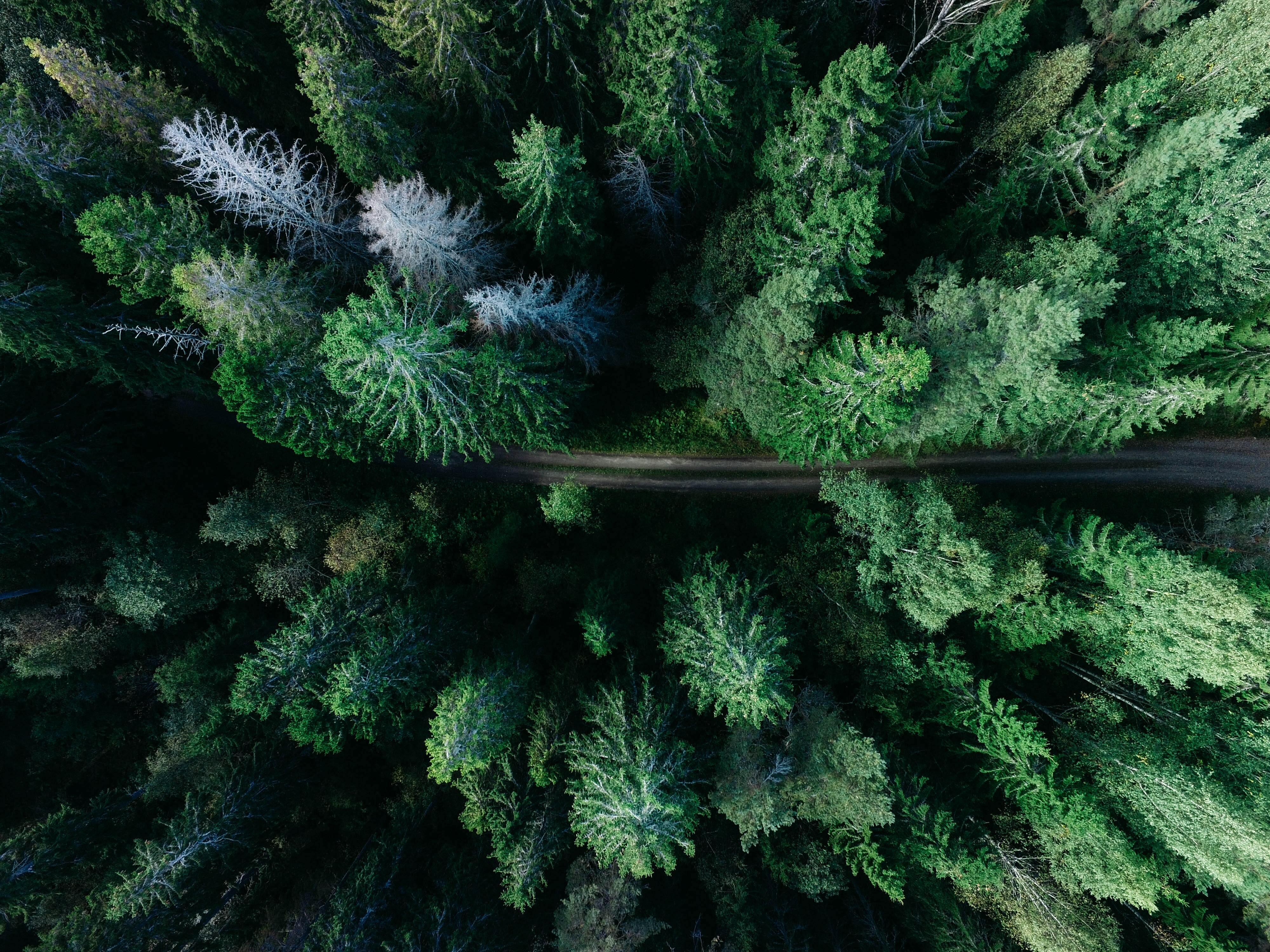 Arial picture of trees with a road through the center